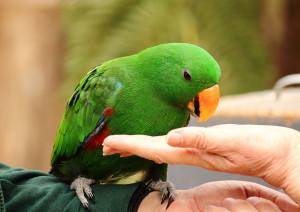 Alimentacion loro - cotorra - canario - catita - veterinario aves - buenos aires