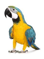 clamidiosis aviar