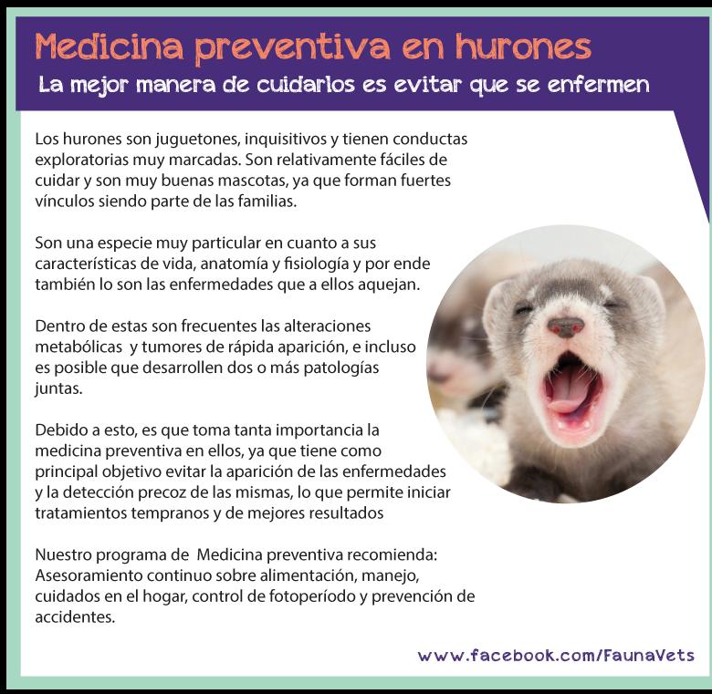 Veterinario hurones vacunas ecografia controles buenos aires
