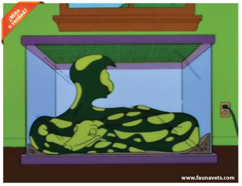 serpiente come hombre - mito o verdad
