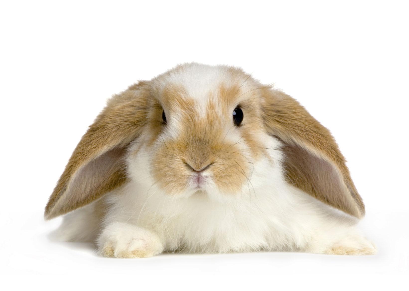 dieta conejos que comen control veterinaro alimentos permitidos y prohibidos