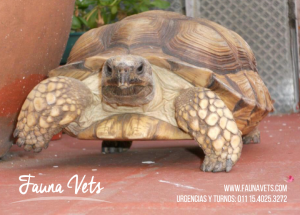 control a tortugas veterinarios exoticos