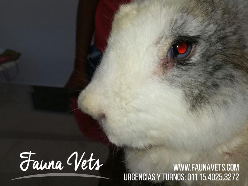 Conejo con Sarna - Fauna Vets Veterinaria exoticos