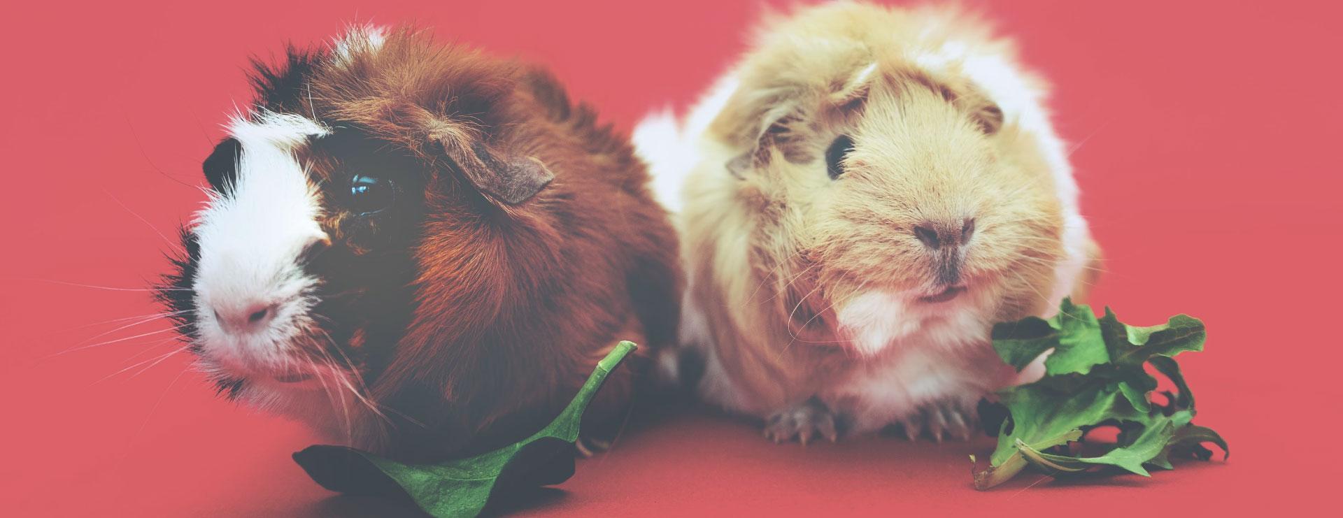 home-top2-cobayo-veterinarios-exoticos-fauna-vets