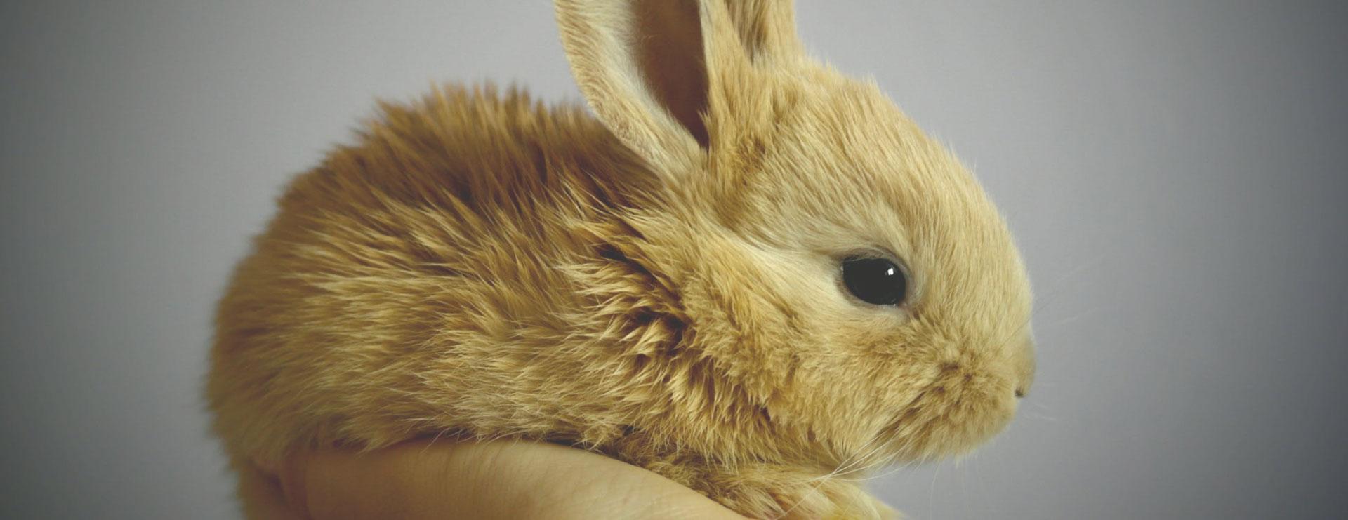 home-top4-conejo-veterinarios-exoticos-fauna-vets
